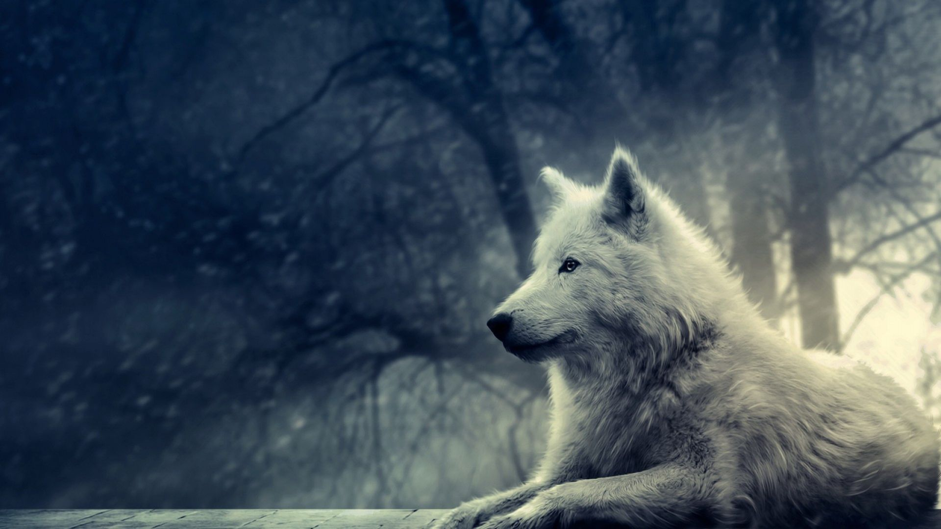 Amazing Wolf Wallpapers
