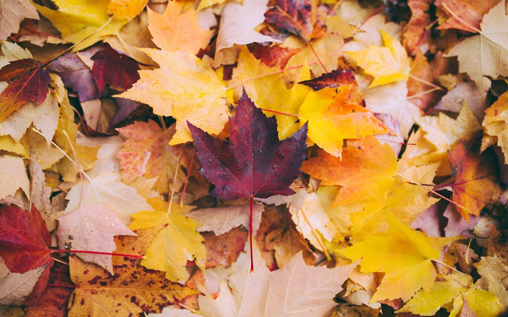 Autumn Leaves Wallpapers New Tab – Charms of Autumn