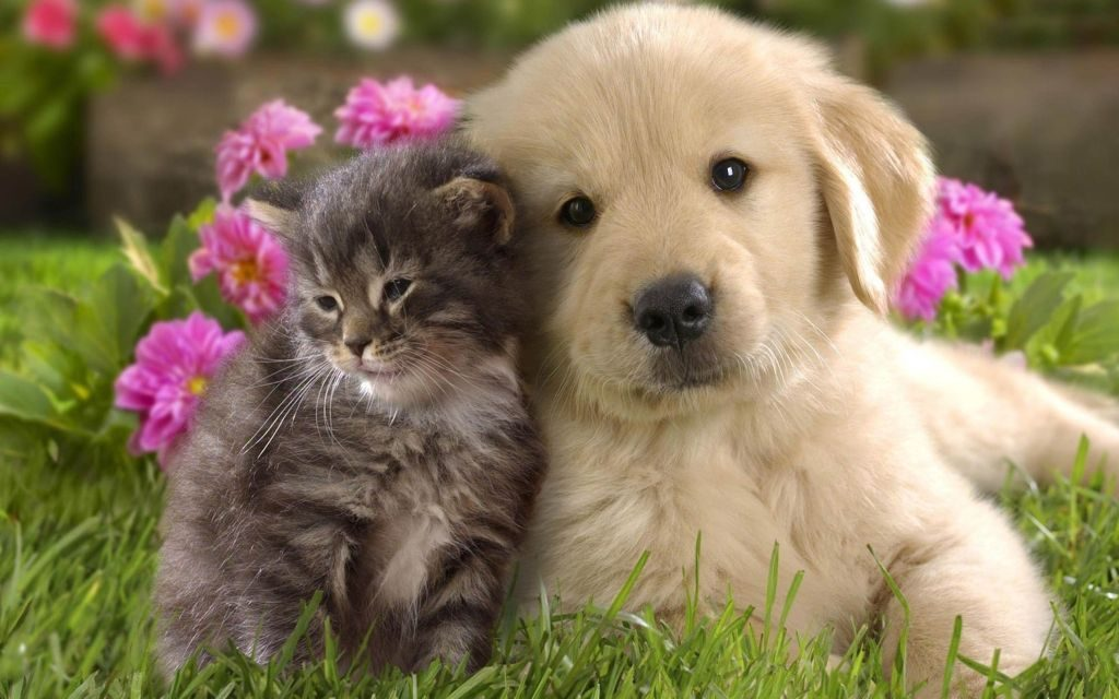 Cat & Dogs HD Wallpaper Chrome Theme