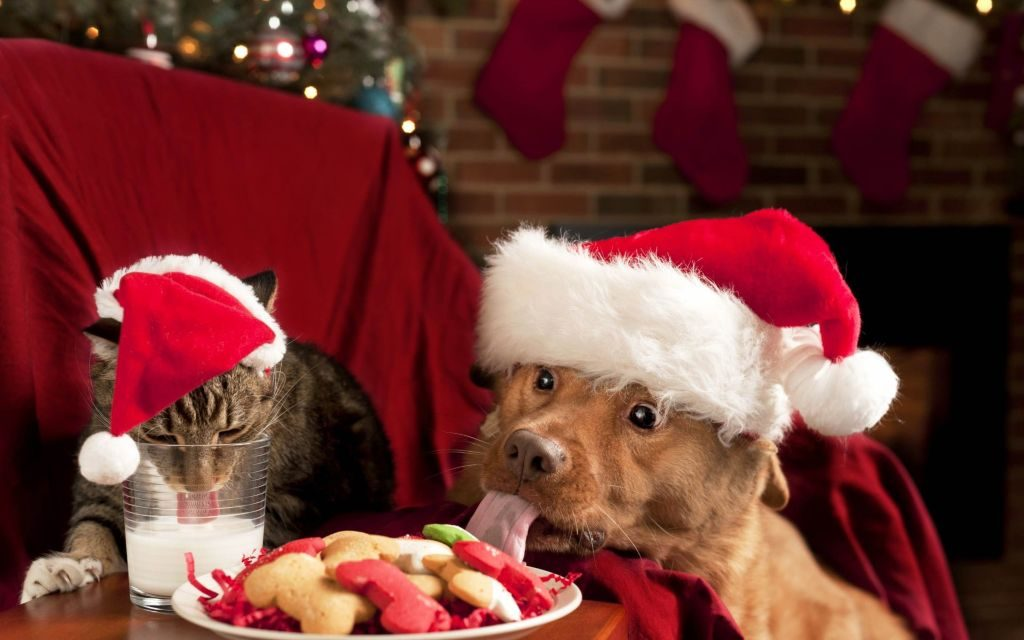 Christmas Dogs & Cats HD Wallpaper Theme