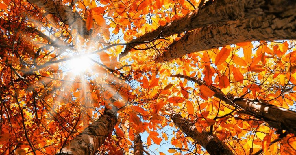 New Autumn Wallpapers & Backgrounds – Enjoy the Colors!