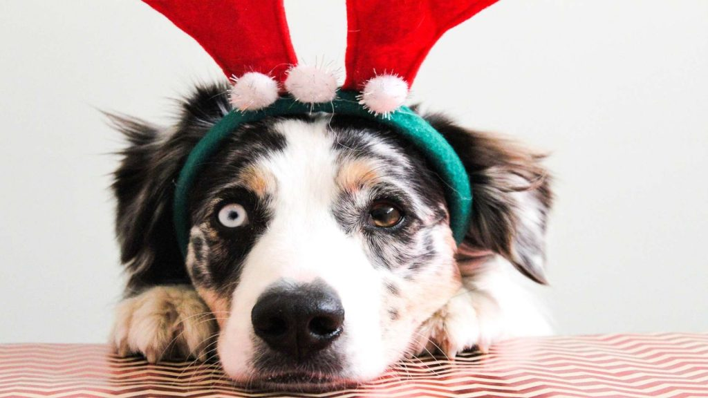 Christmas Dogs Wallpaper HD & New Tab
