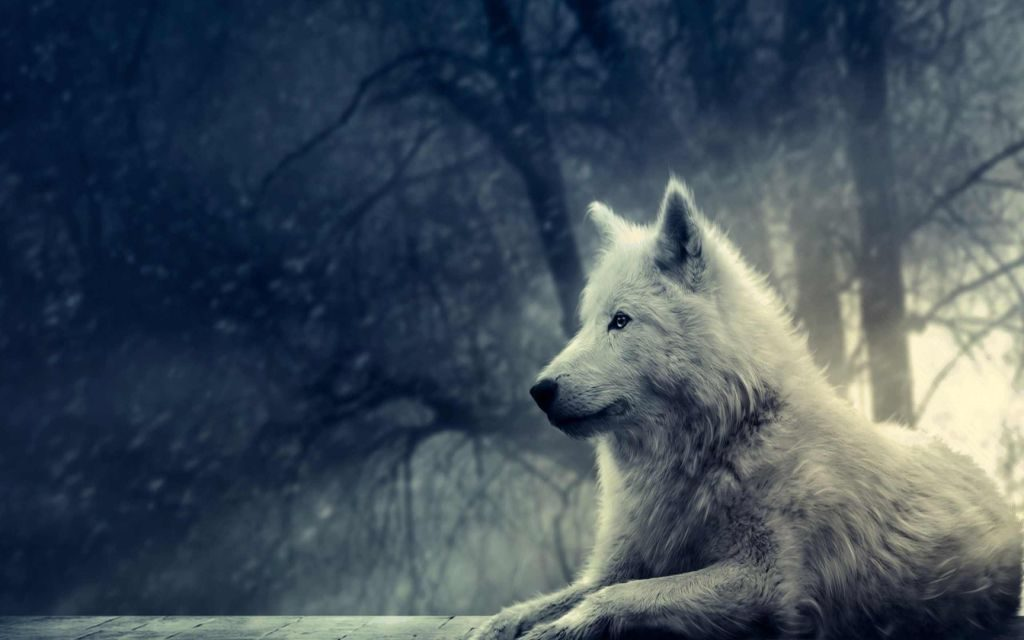 New White Wolves HD Wallpapers & Themes – Dangerous and Beautiful!