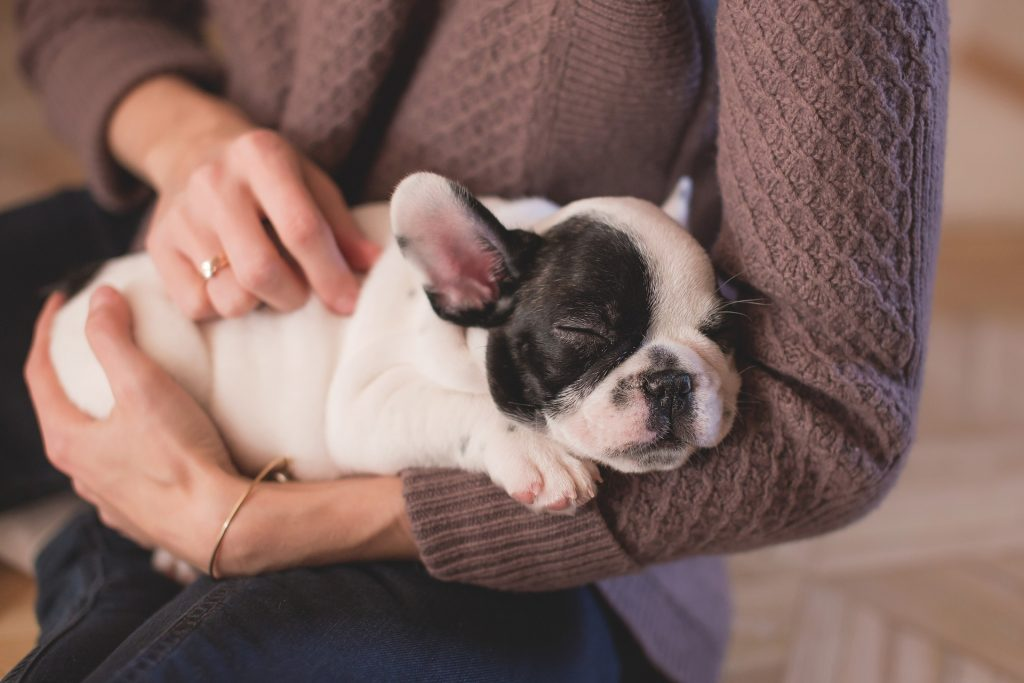 10 Cute Facts About Puppies + Cute Puppy Wallpapers!