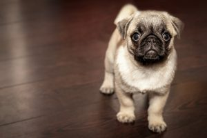 Cutest Puppy Dog Backgrounds and Themes