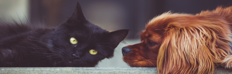 Cats and Dogs HD