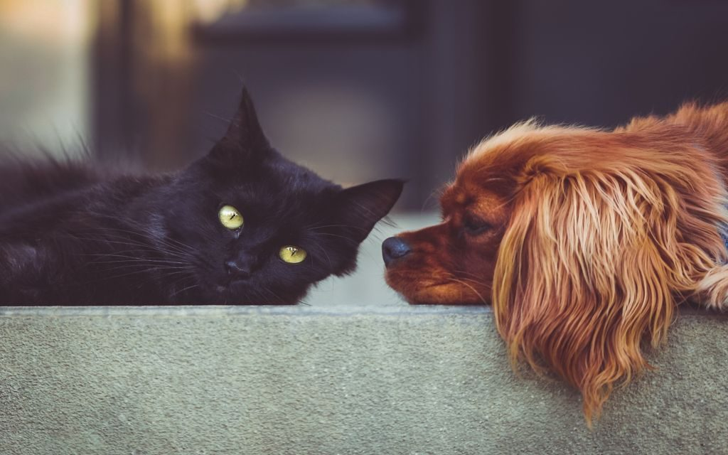 Cats and Dogs Wallpapers & Tips to Make a Cat and Dog Friends!