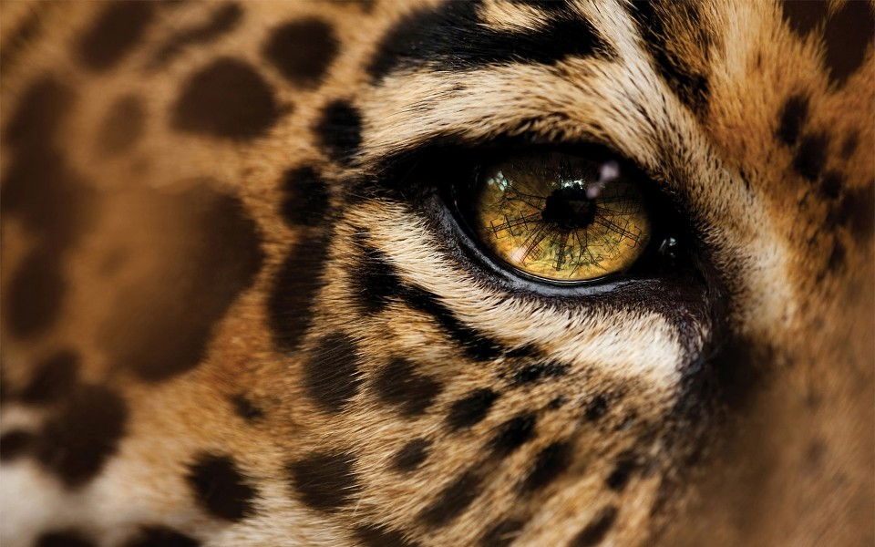 Amazing Jaguar Wallpapers