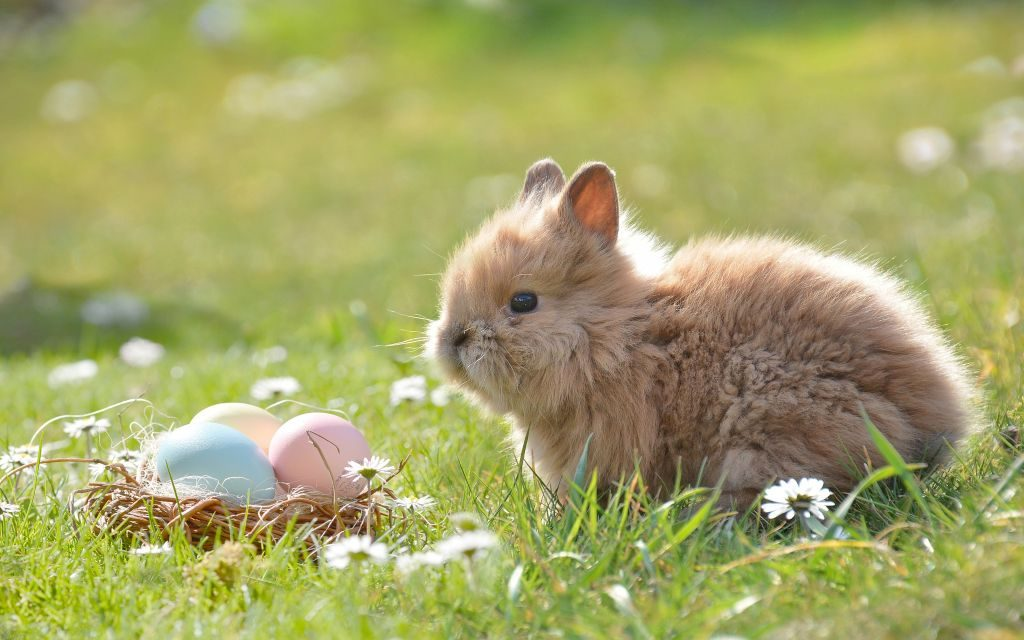 Why do we have Easter eggs and the Easter bunny?