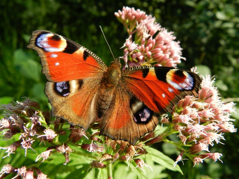 Crazy Facts About Butterflies