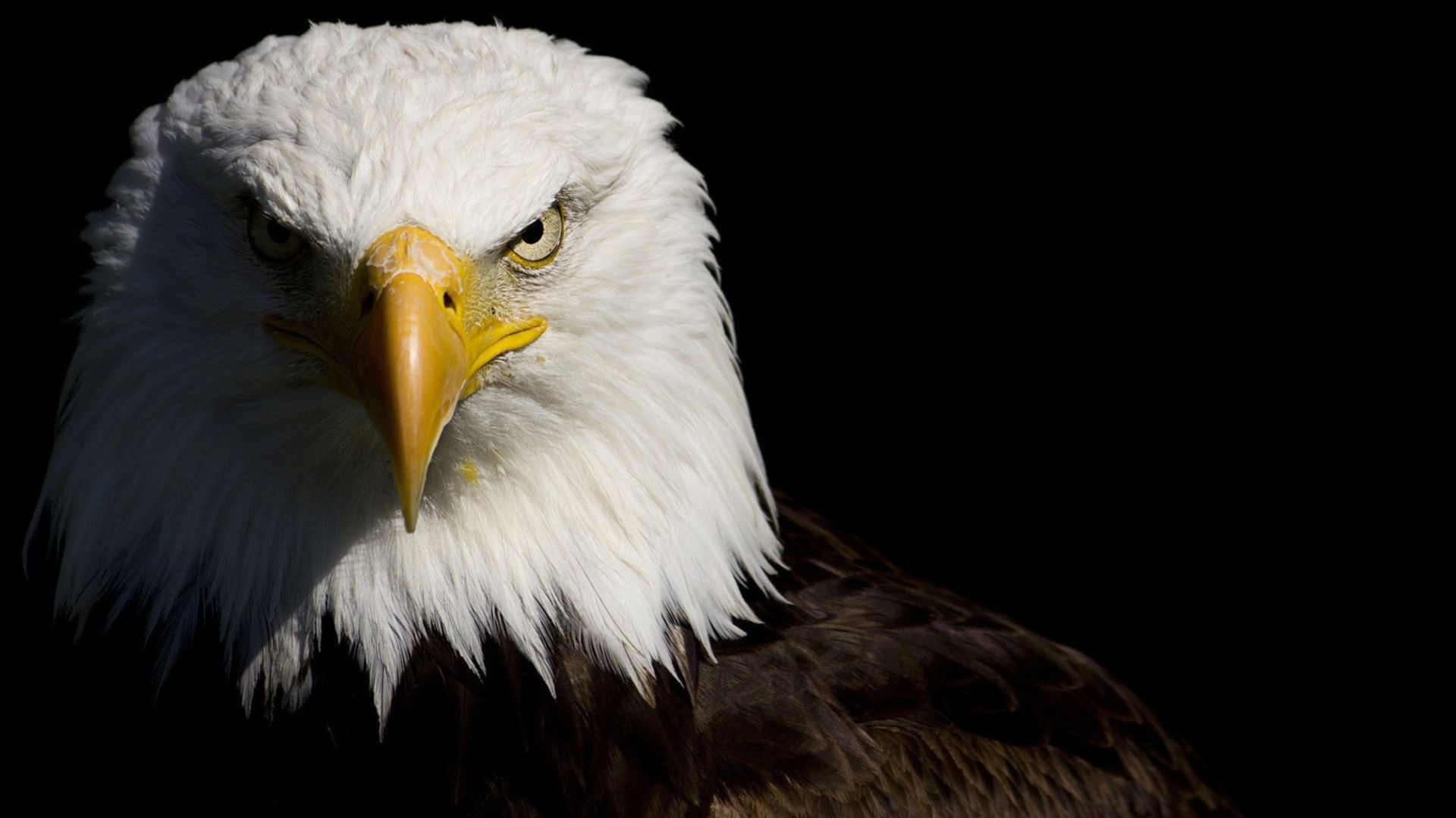 American Eagle Backgrounds