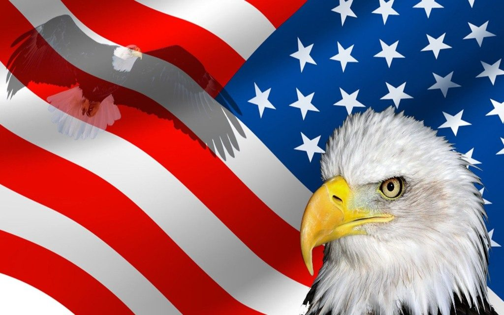 Bald Eagle American Pride