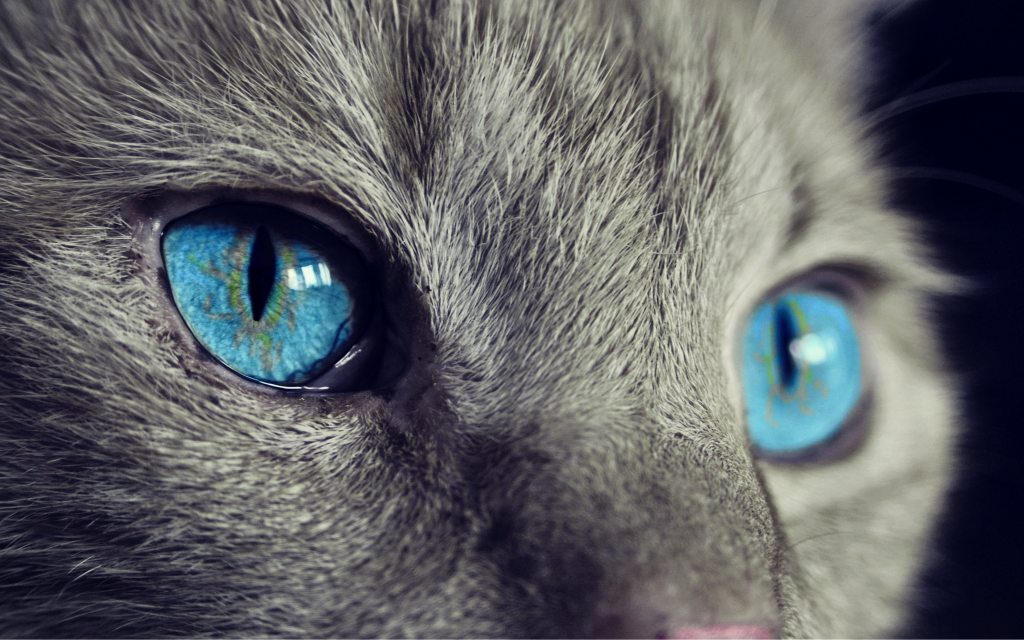 Cat Eyes Wallpapers HD