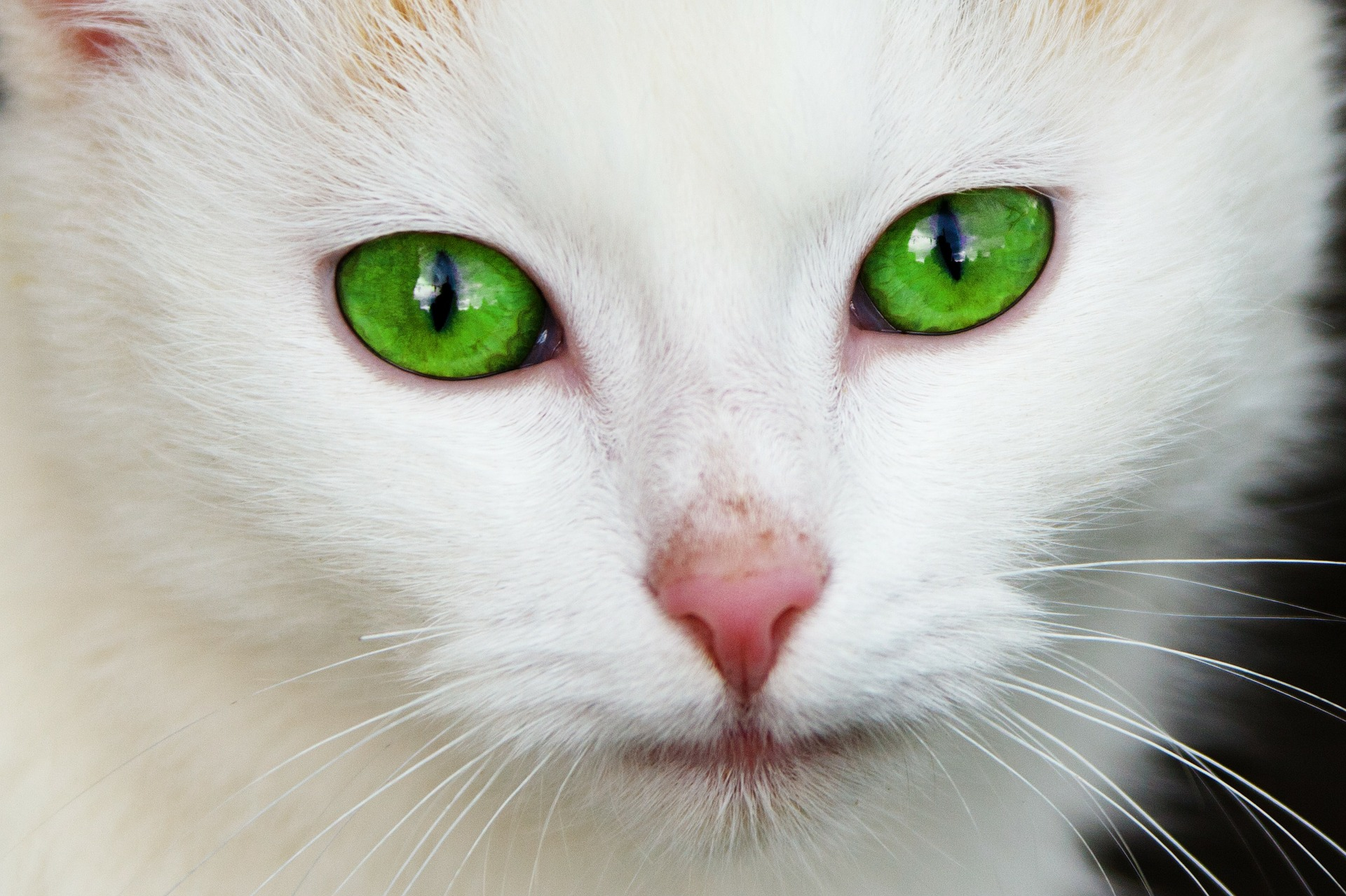 Cat Eyes Wallpapers HD Cat With Blue Eyes & Green Cat Eyes & Cats Eyes Wallpaper HD