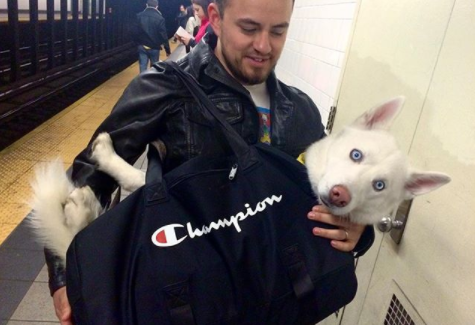 11 Dog owners got very ingenious whit a new law banning dogs from the Subway